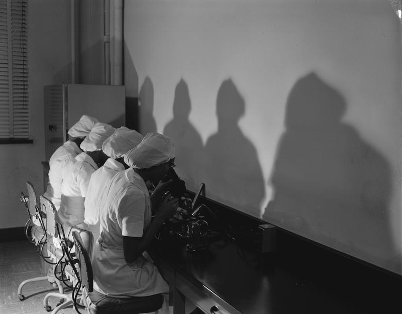 Four technicians at the Tuskegee Institute's HeLa mass production center inspecting HeLa cells before shipping them, 1950s