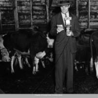 Farm reporter with cows