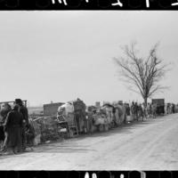 Evicted black and white demonstrators along Highway 60, Missouri, 1939